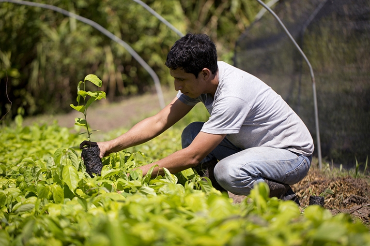 Tree planting in Peru, Photo Cred: Ecosia