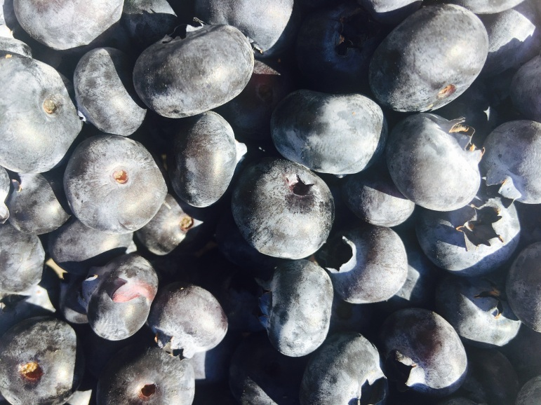Sooooo many blueberries in our cooler.
